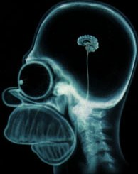 homer_cerebro.jpg